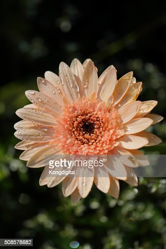 pink flower : Stock Photo