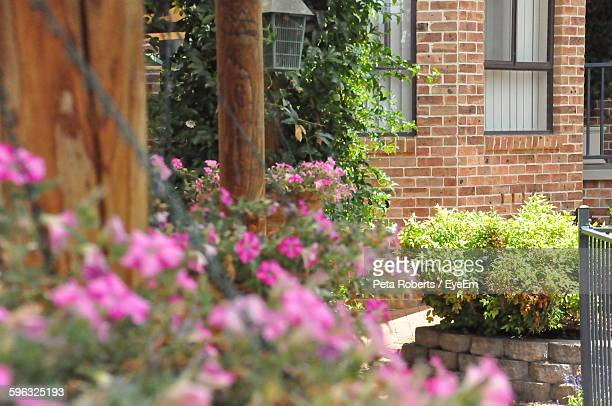 Pink Flowering Plants Growing Outside House