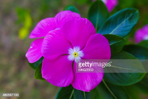 pink flowerload : Stock Photo