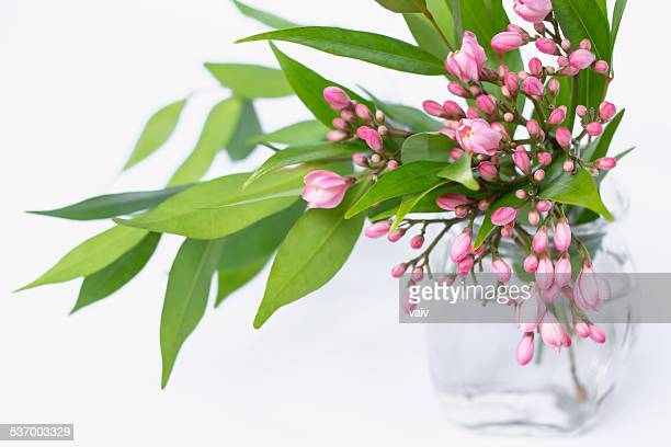 Pink flowers and green leaves in vase