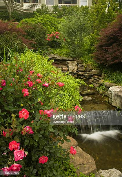 Pink flowers beside waterfall in garden