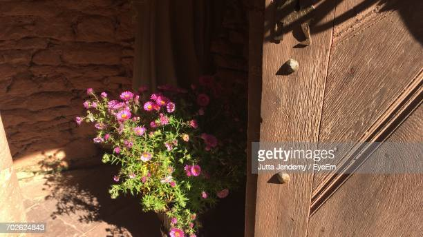 Pink Flowers Growing On Wall