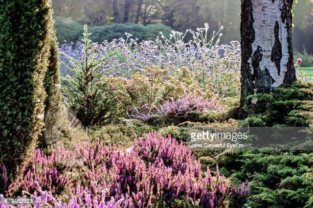 Pink Flowers In Forest