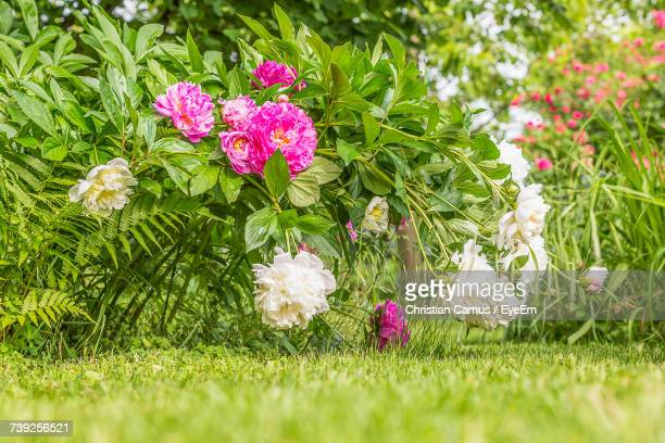 Pink Flowers On Grass