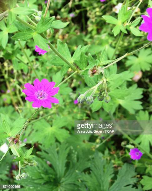 Pink flowers on plant
