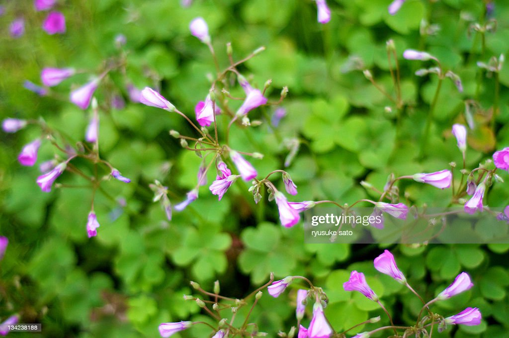 Pink flowers : Stock Photo