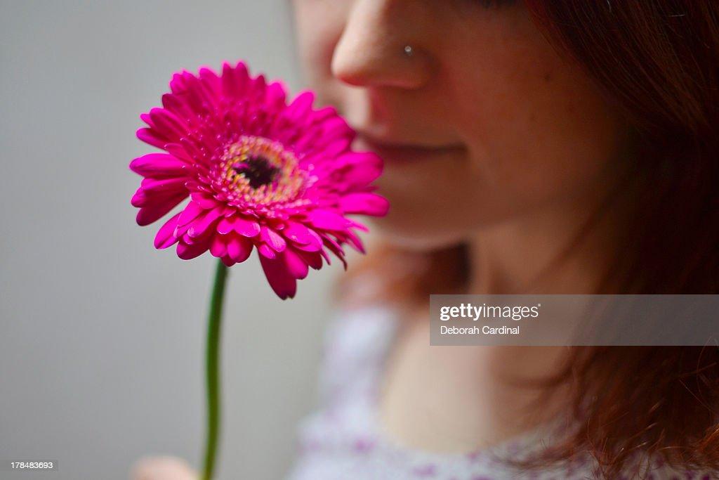 Pink gerbera : Stock Photo