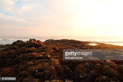 Pink Headland : Stock Photo