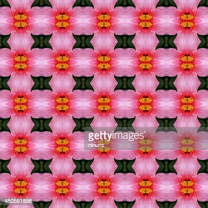 Pink hibiscus flower in full bloom seamless : Stock Photo