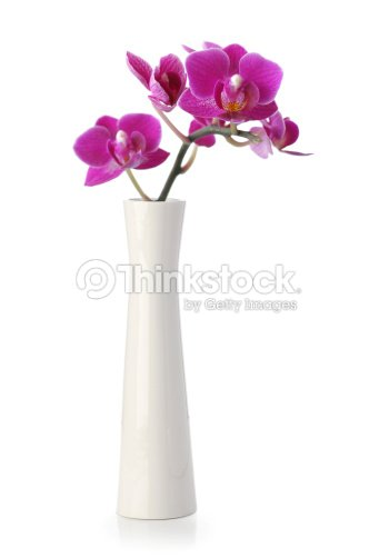 rosa orchidee blume in wei en vase stock foto thinkstock. Black Bedroom Furniture Sets. Home Design Ideas