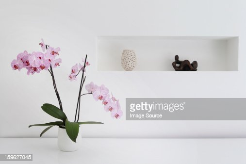 Pink orchid plant and ornaments in room : Stock Photo