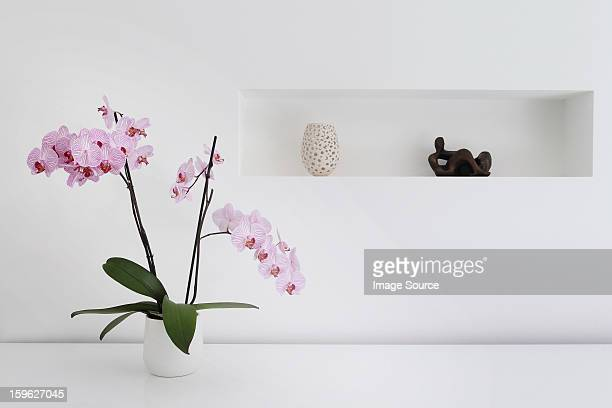 Pink orchid plant and ornaments in room
