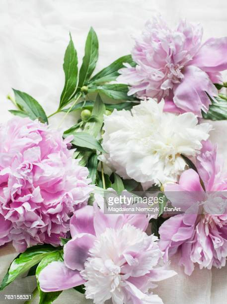 Pink peonies on table