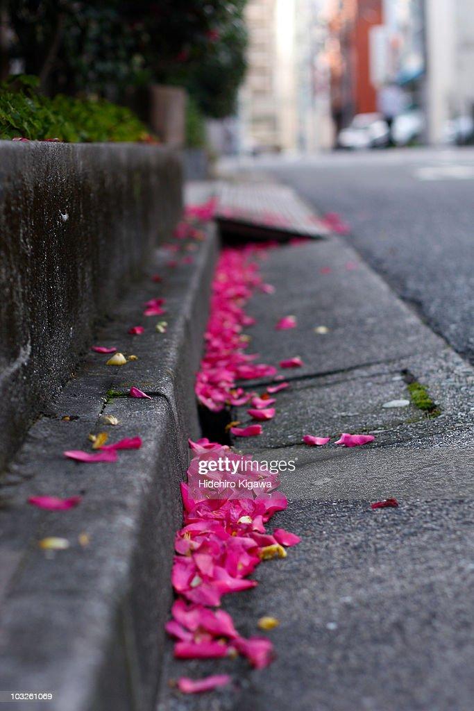 Pink petals : ストックフォト