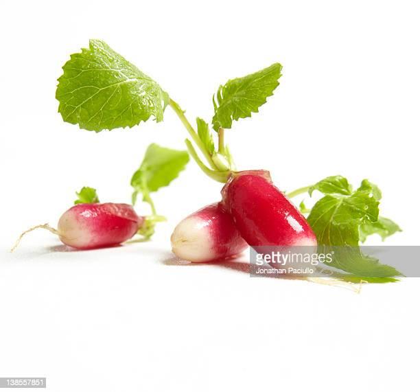 Pink radish