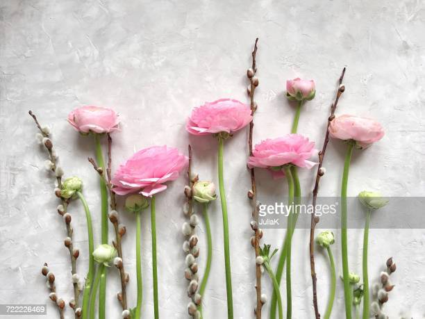 Pink ranunculus flowers and pussy willows in a row