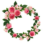 Pink rose flowers and buds circle frame isolated on white. Flat lay, top view.