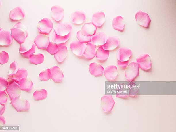 Rosa Rosenblüten