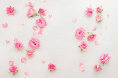 Roses background. Various pink roses buds and petals  scattered on white background, overhead view, copy space