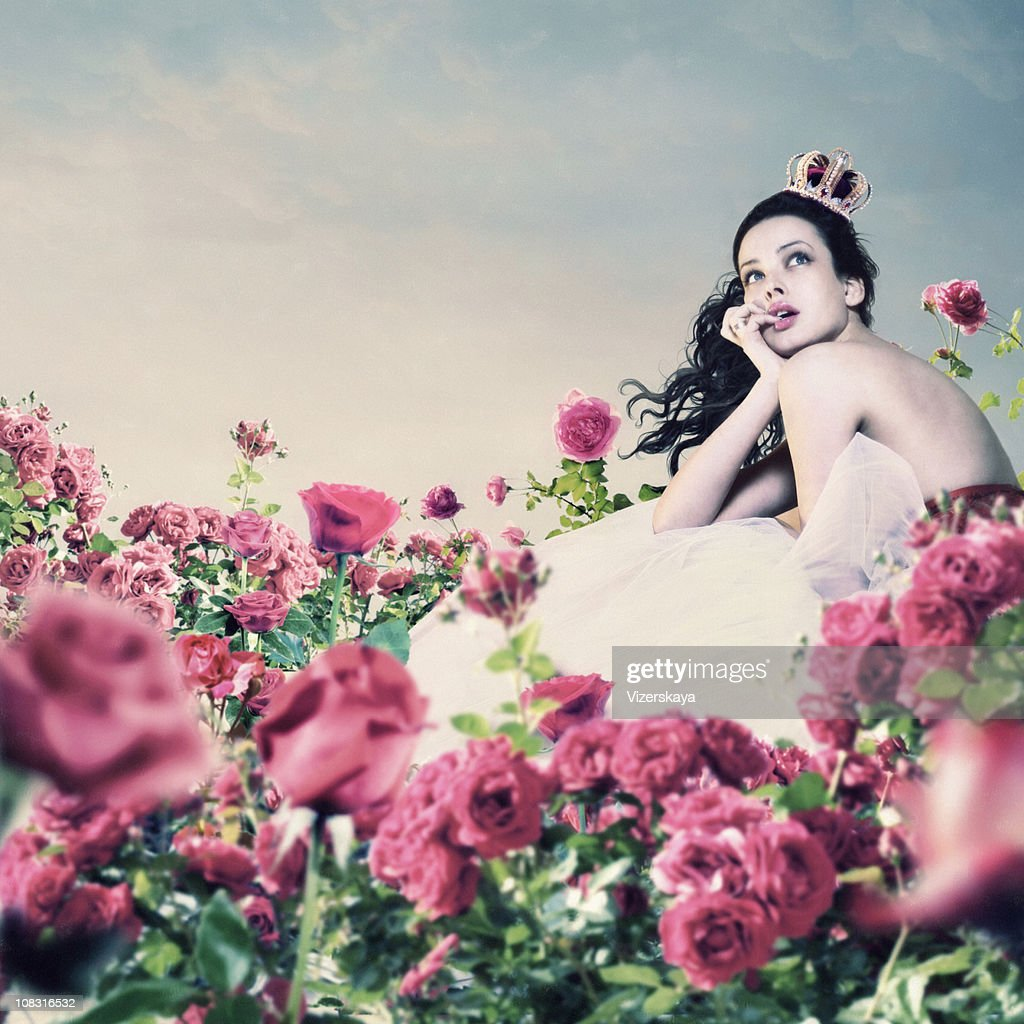 pink roses garden : Stock Photo