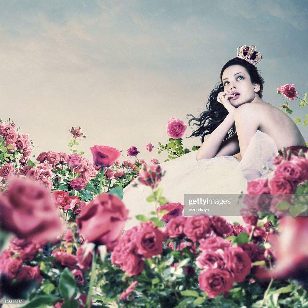 pink roses garden