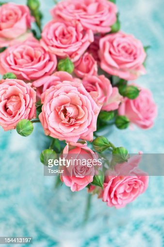 pink roses : Stock Photo