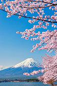 Pink Sakura tree and Fuji Mountain in Spring