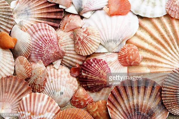 pink scallops