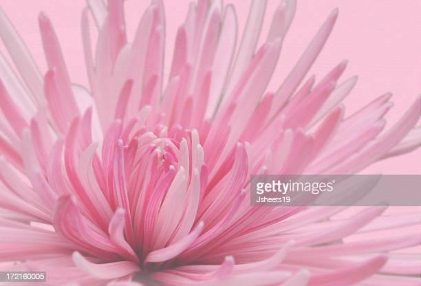 Pink Spray Background
