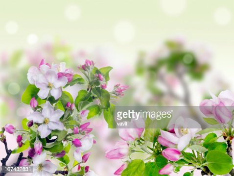 Pink spring concept : Stock Photo