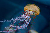 pink striped jelly fish on black background