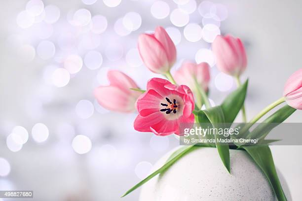 Pink tulips in a ceramic vase with bokeh background