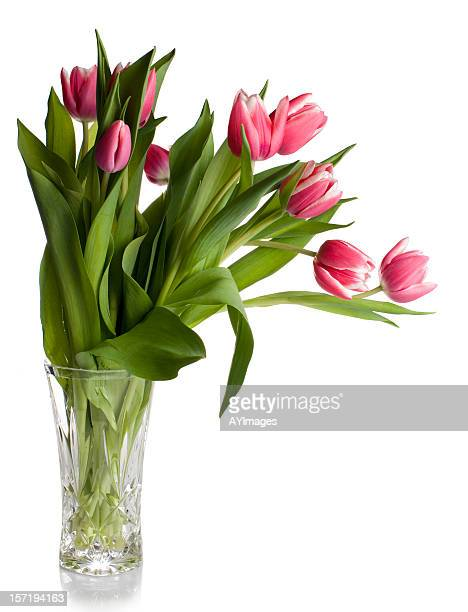 Pink tulips in glass vase on white