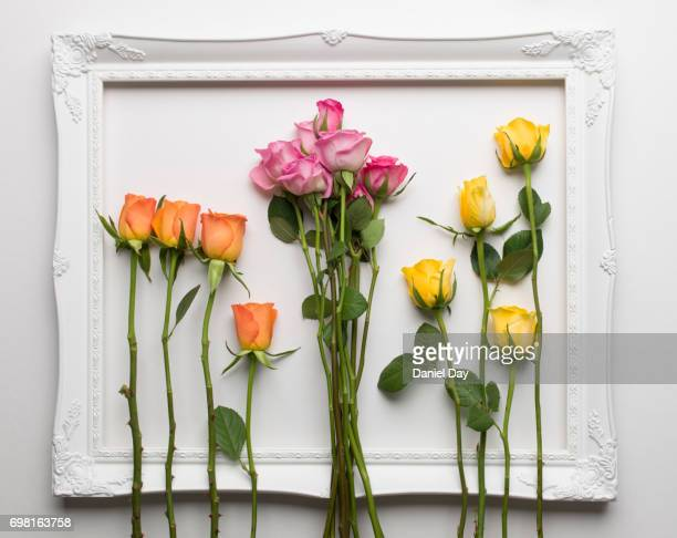 Pink, yellow and orange roses separated into bunches within a white picture frame on a white background