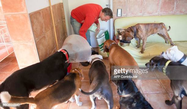 Pino Puglisi owner of dog hotel Paradiso feeds his fourlegged guests in Ludwigsburg southwestern Germany on a October 13 2017 Dog owners can bring...