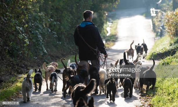 Pino Puglisi owner of dog hotel Paradiso goes for a walk with his fourlegged guests in Ludwigsburg southwestern Germany on a sunny October 13 2017...