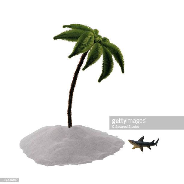 Pipe Cleaner Palm Tree and Plastic Shark