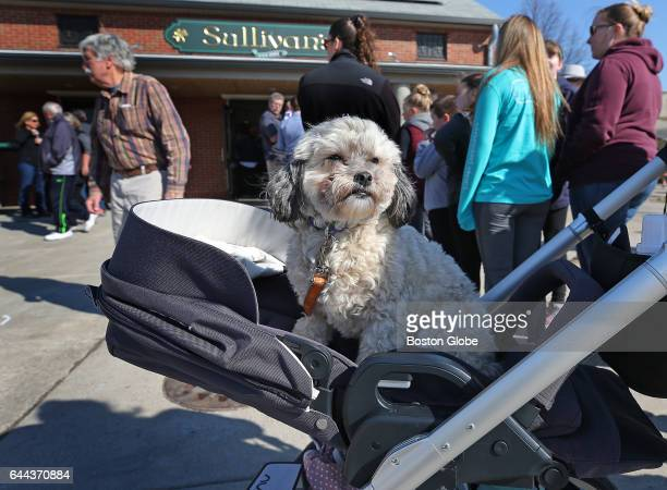 Piper waits in line for a hot dog with her owner Leigh Cappello at Sullivan's on Castle Island in Boston on Feb 23 2017 Castle Island was crowded...