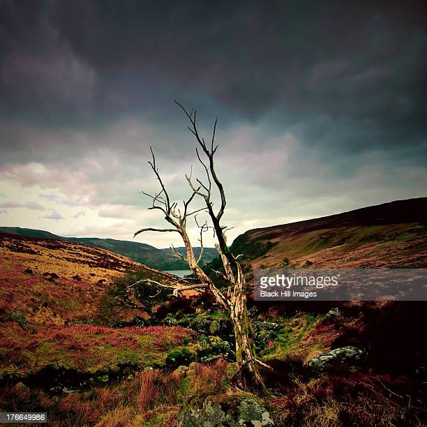 Pipers Brook Luggala Valley Wicklow