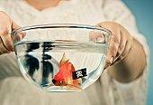 Pirate goldfish