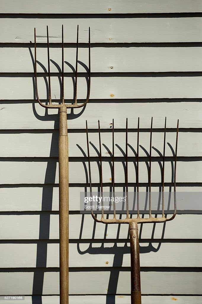 Pitchforks beside a barn : Foto de stock