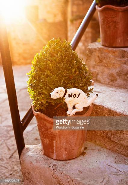 Placard representing dog in flower pot