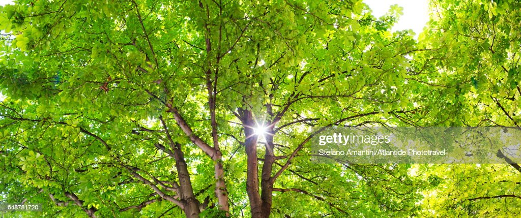 Place (square) Dauphine, treetop : Stock Photo