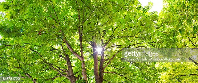 Place (square) Dauphine, treetop : Foto stock