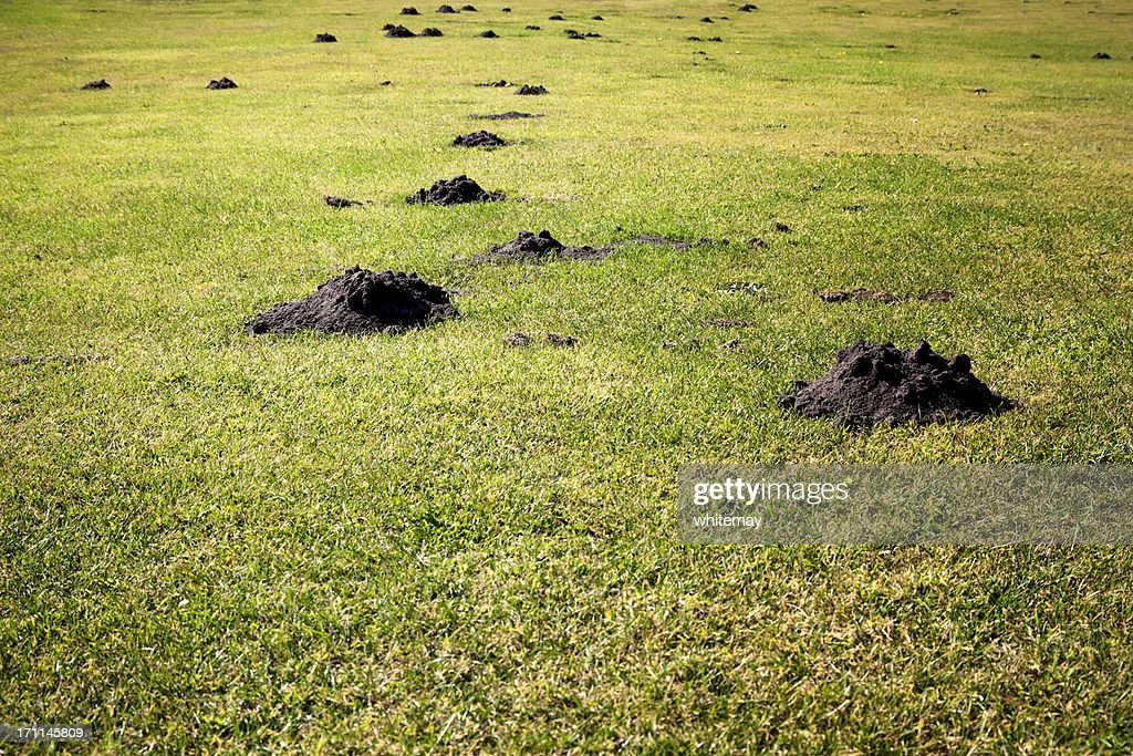 Plague of mole hills