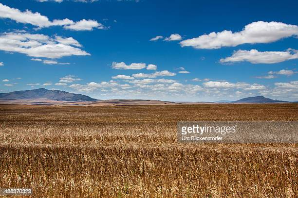Plains of South Africa.