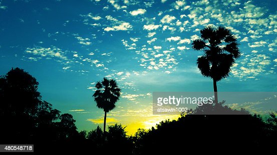 Plam tree and sunset : Stock Photo