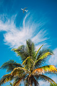 Planes, clouds and Palms