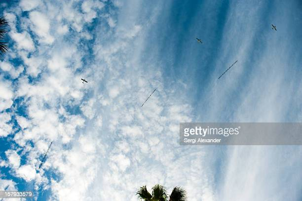 Planes flying by with Plane Text Flies Banners Over Delano Hotel at Delano Hotel on December 6 2012 in Miami Florida