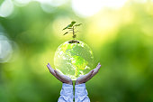 Planet and tree in human hands over green nature, Save the earth concept, Elements of this image furnished by NASA